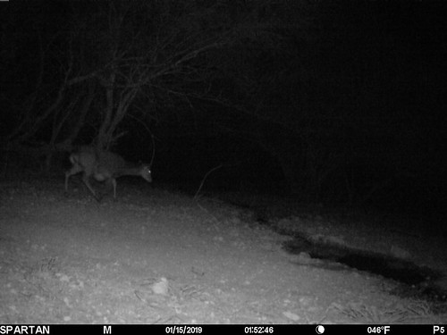 2019-01-15 01:52:46 - Crystal Creek 3 | by Crystal Creek Bowhunting