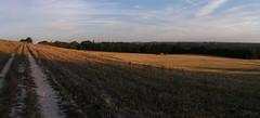 20080917 38475 1018 Jakobus Feld Wald Weite_P01 - Photo of Sainte-Alauzie