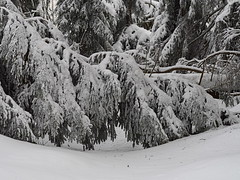 Harz February 2019