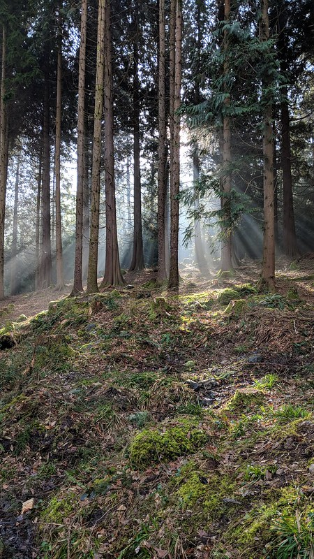 Sunlight in Hore Wood