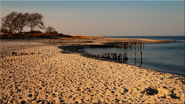 The Baltic coast In the Behrensdorf nature reserve
