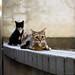 Cat &Cat