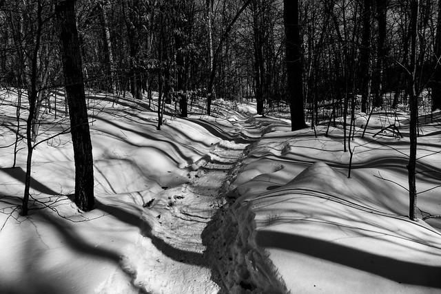 wolf trail - shadows