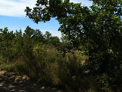 20080916 38178 1017 Jakobus Wiese Bäume - Photo of Pern