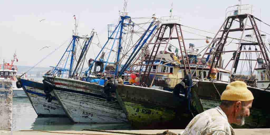 Le réchauffement des océans nuit aux fruits de mer