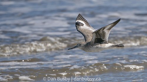 Willet flyby