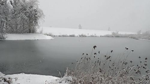 Schwäne auf zufrierendem Teich - Swans on a freezing pond