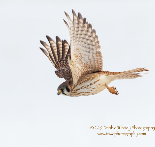 Wanted:  Dinner For A Hungry Kestrel
