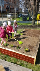 Jarné práce v záhradke - marec 2019