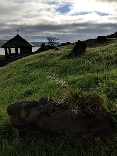Dingle, Ireland - Irish Grass in the famine graveyard