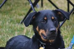 Link, my grand dog