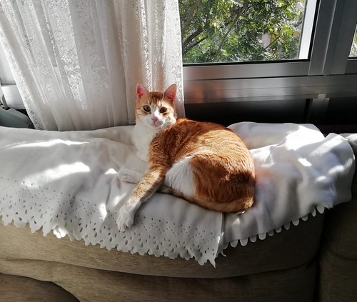 Robin, gato blanco y naranja guapo y súper dulce esterilizado, +inmunodeficiencia nacido en Marzo´15, en ADOPCIÓN ESPECIAL. Valencia. ADOPTADO. 32476690977_acb7ca806c