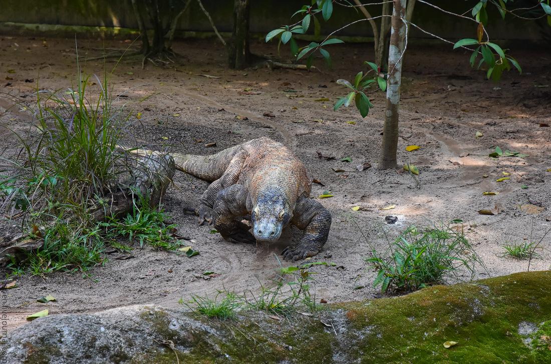 Singapore-zoo-(39)