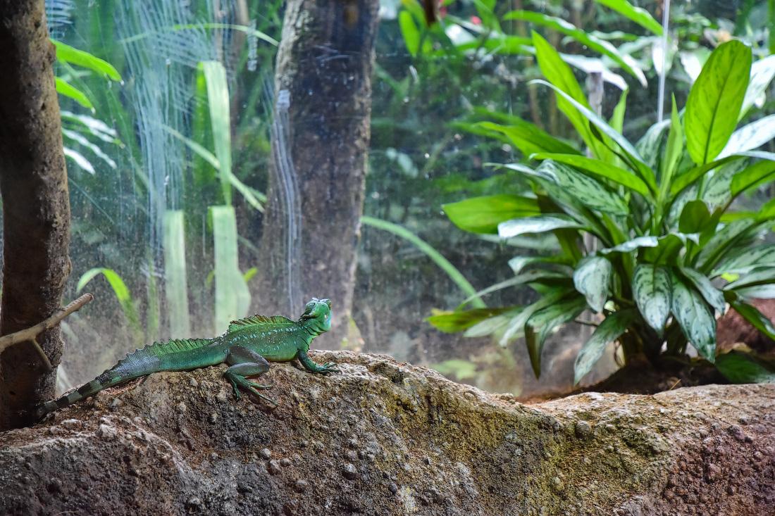 Singapore-zoo-(36)