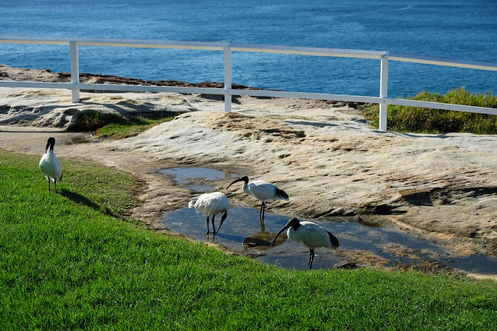 Coogee To Bondi Beach Walk, Sydney, Australia