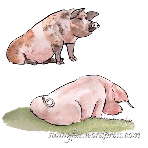 two pigs sitting separately on a page