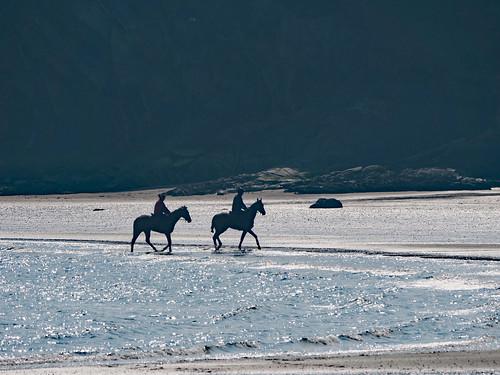horses on beach 2