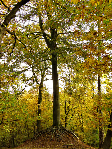 Belgian Tree of the Year 2018