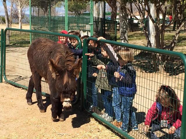 Infantil visita la Granja Escuela (Orvalle - 2019)