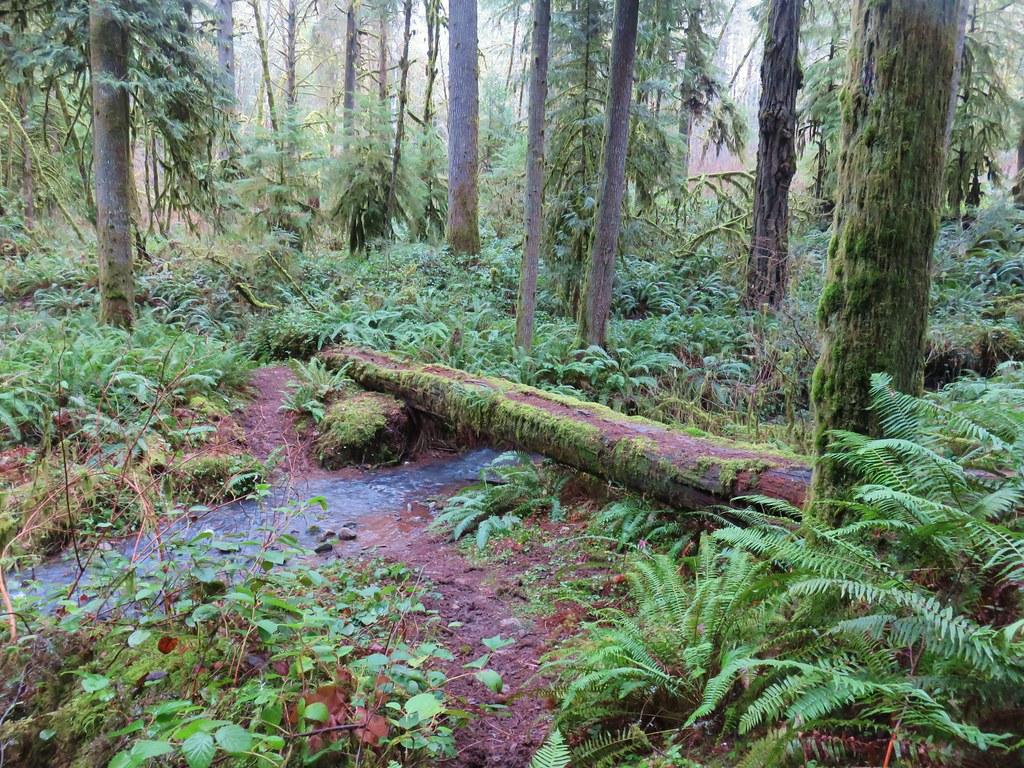 Crossing Crale Creek