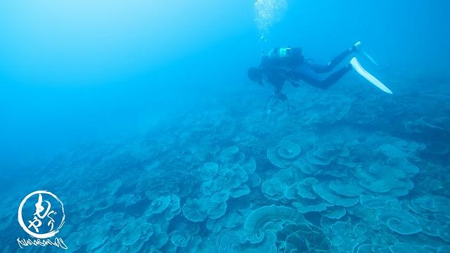 サンゴ畑もいいよね