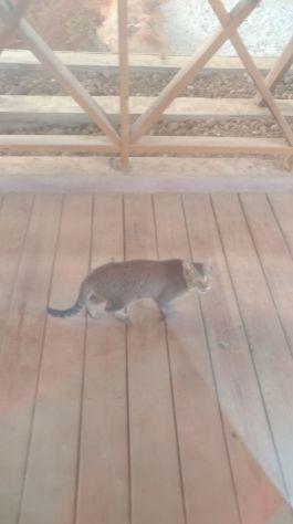 現今被關在六福村貓熊館的貓之一,牠們被用來抓老鼠,卻無法離開館場,形同被無限期囚禁,亦無遊客來訪。2019年1月。(圖片為作者提供)
