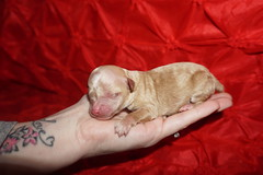 Puddles 5.5oz 1 day old (33)