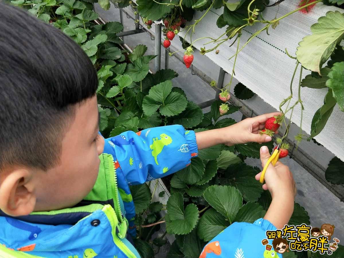 苗栗縣大湖灣潭玫瑰草莓園-27