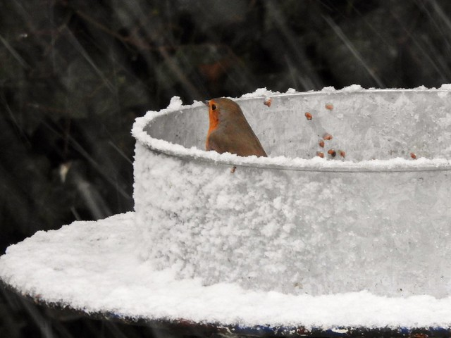 Juchhe-juchhe-juchhe der erste Schnee ❄️❄️❄️