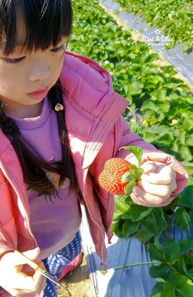 草莓世界.台中採草莓04