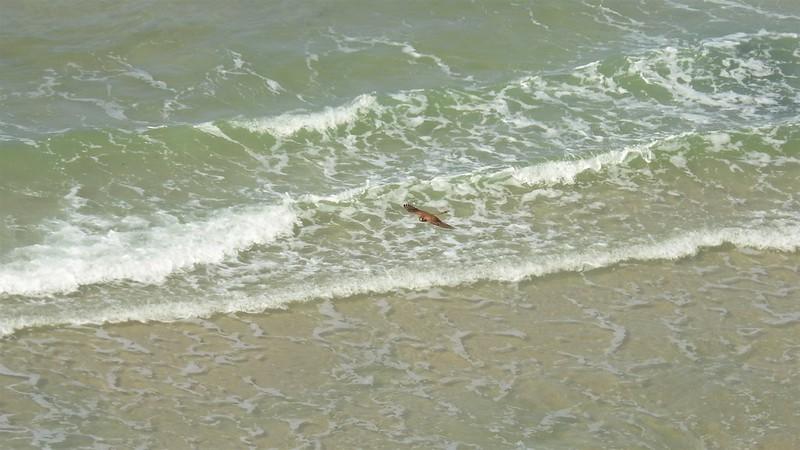 Пустельга летит над морем