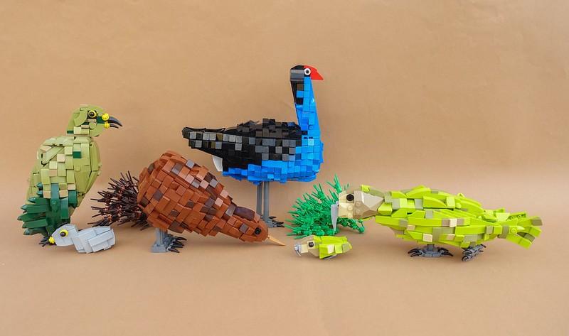 New Zealand Birds - Uccelli della Nuova Zelanda
