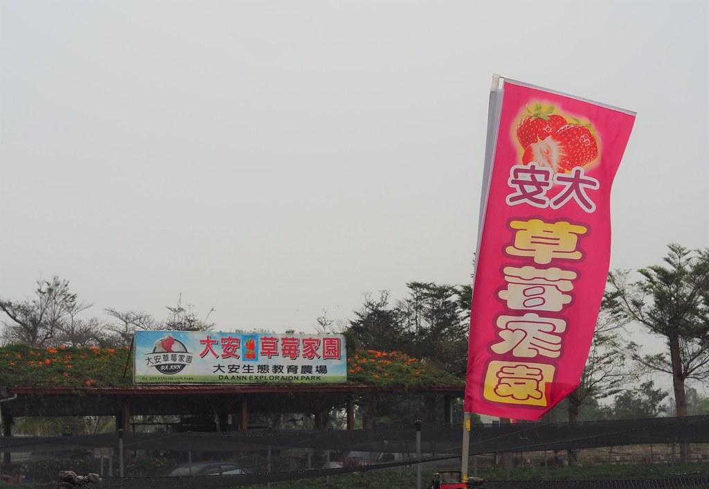 善化大安草莓 (8)