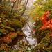 Shoyoen Garden by FlickrDelusions