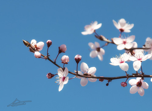 Llega la Primavera 11