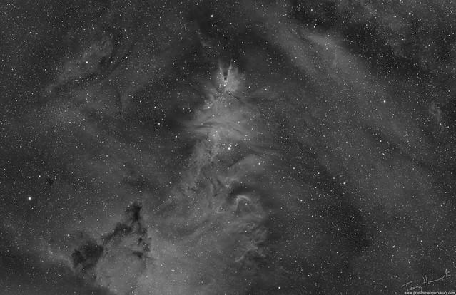 Christmas Tree, Cone and Fox Fur NGC 2264 (H-Alpha Version)