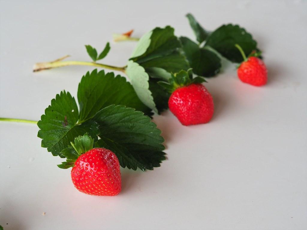 善化大安草莓 (13)