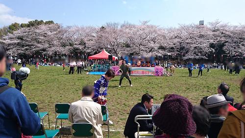 20190331 蕨市民公園桜祭り
