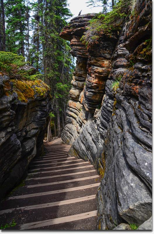 Athabasca Falls  (12)