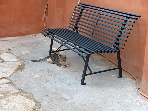 chat sous un banc