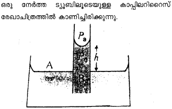 Plus One Physics Previous Year Question Papers and Answers 2017 49