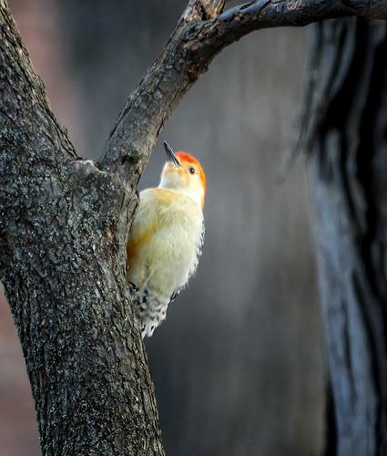 Dawn Birdie
