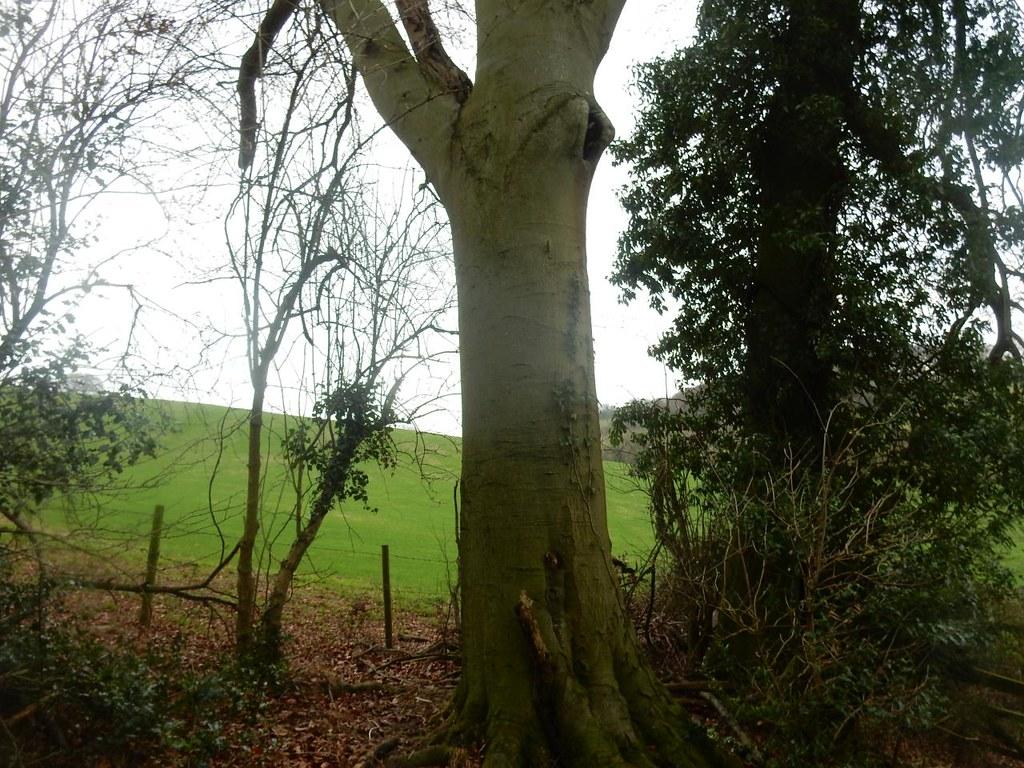 Tree and hills Little Kimble to Saunderton