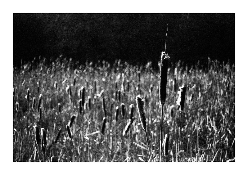 FILM - Backlit rushes