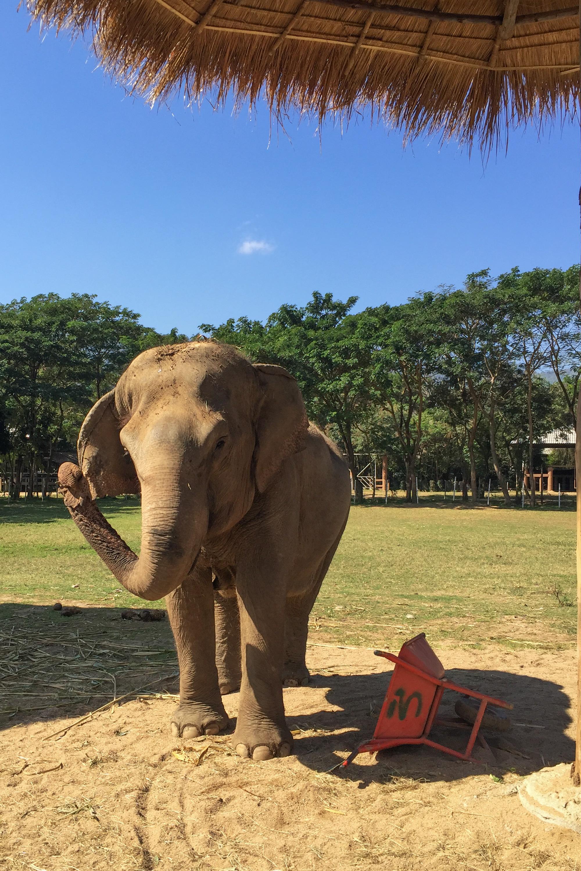 Elephant_Nature_Park8