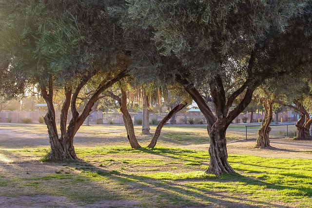 The Olive Grove, Canon EOS REBEL SL1, Canon EF-S 24mm f/2.8 STM