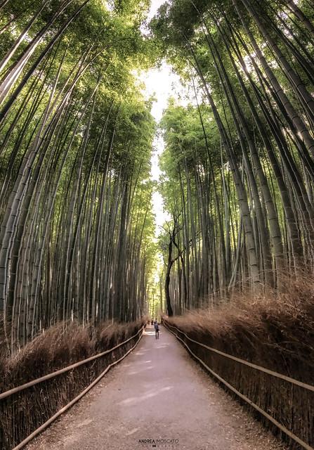Arashiyama Bamboo Grove - Kyoto (Japan)