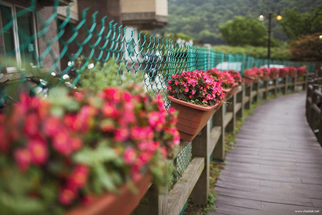 Taiwan_Flickr-030