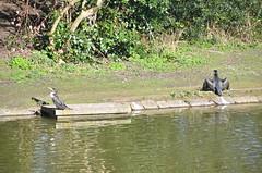 Birkenhead Park, Merseyside.