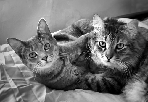 Oliver & Ramona